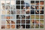 3x3x3 Big Cats Stickers Set