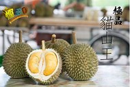 Malaysia Musang King   x 1 (about 1.4-1.5kg) presale